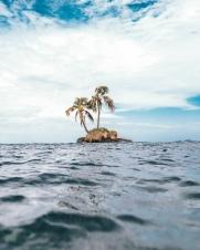 Floating Palms
