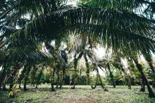 Panama Canopy