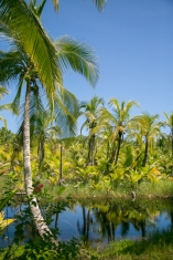 C'est Magic